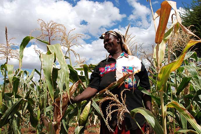 African farmer in a cornfield