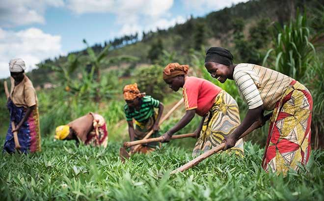 African farmers working in a field