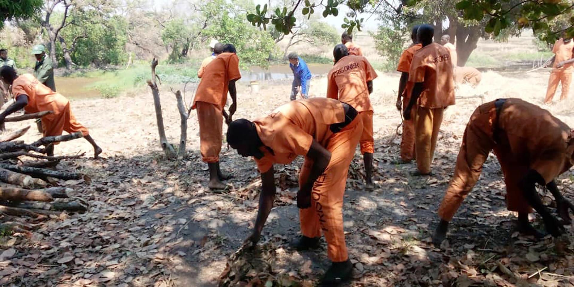 Providing Training on farming techniques for Zambia's Prison Service